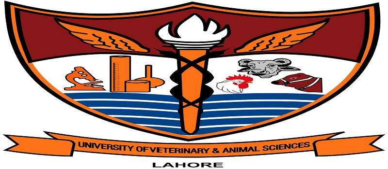 UVAS (University of Veterinary and Animal Sciences) French language classes